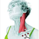 Растяжка передних мышц шеи